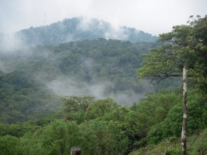 Monteverde Clouds